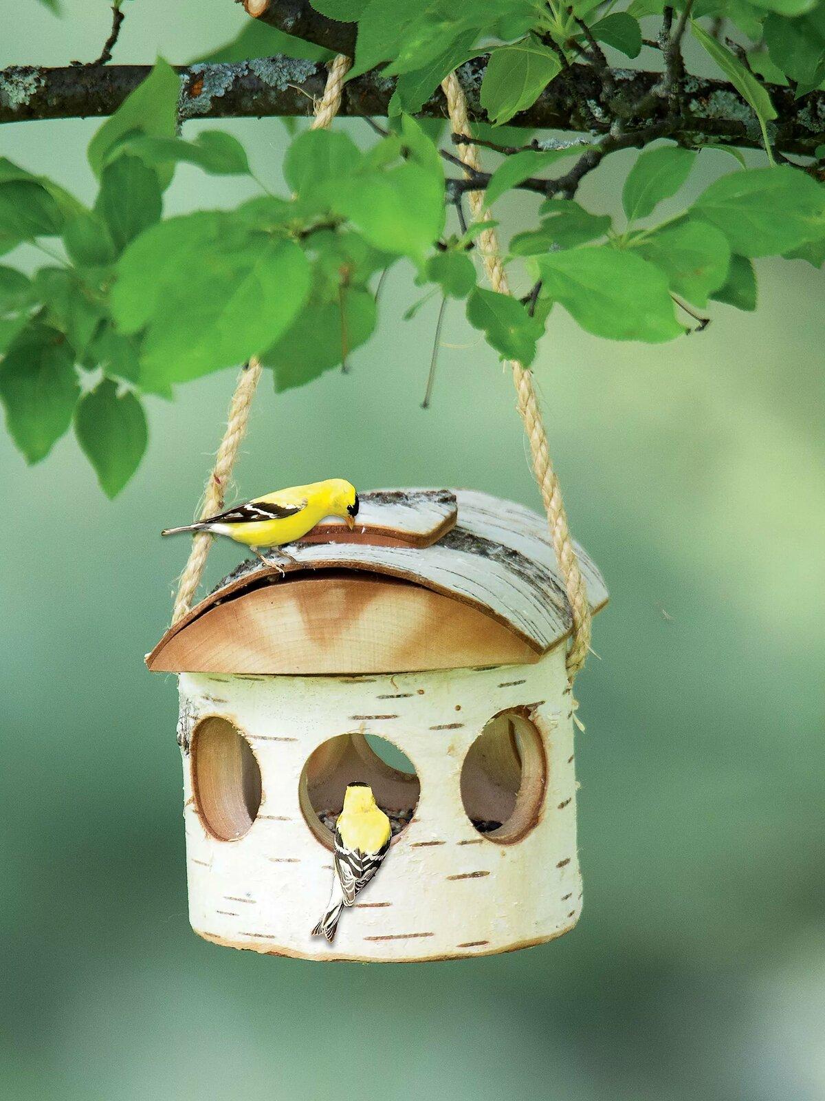Оригинальные картинки с птицами