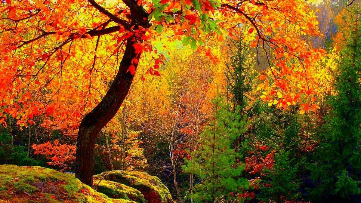 Картинки об осени короткие красивые