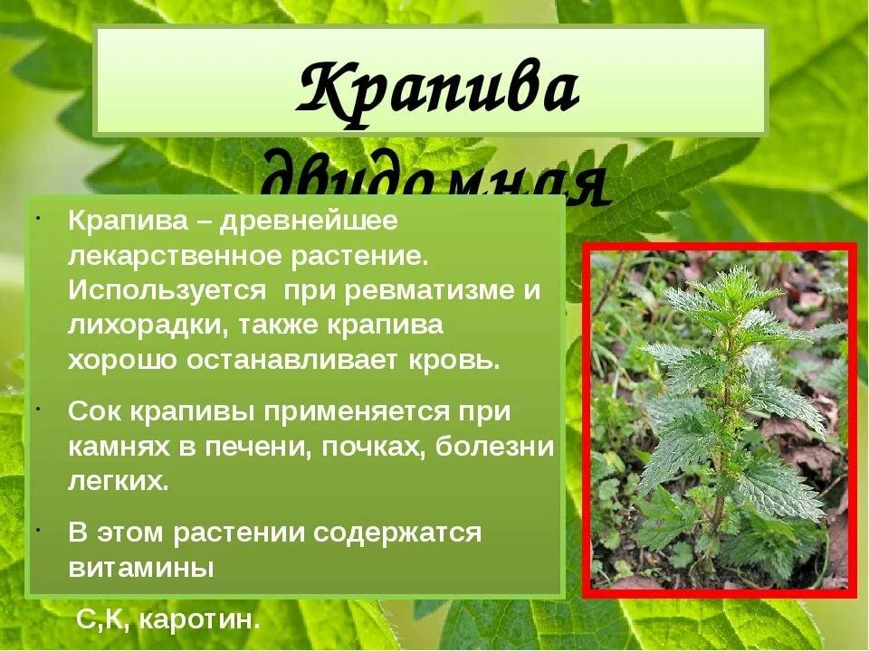 социальных целебные травы россии и их свойства программы поднял