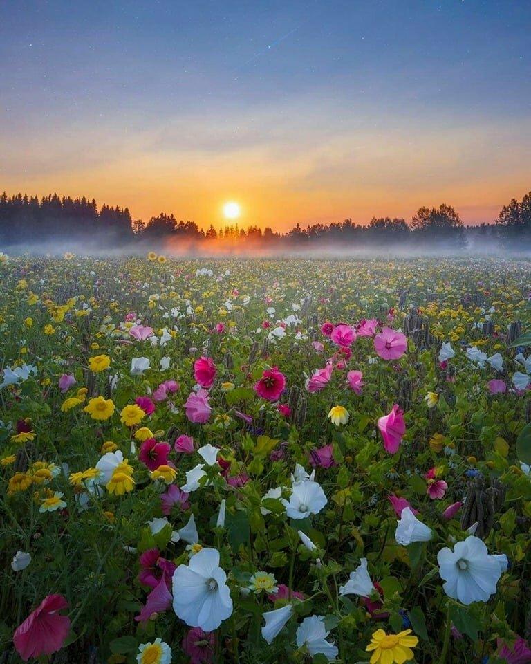 Красивые цветы на поле фото