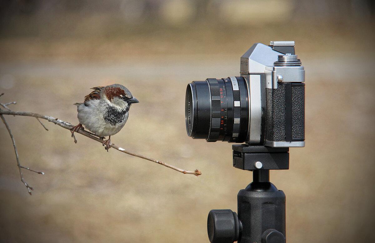 мнение, что фотоохота на птиц объективы под рукой