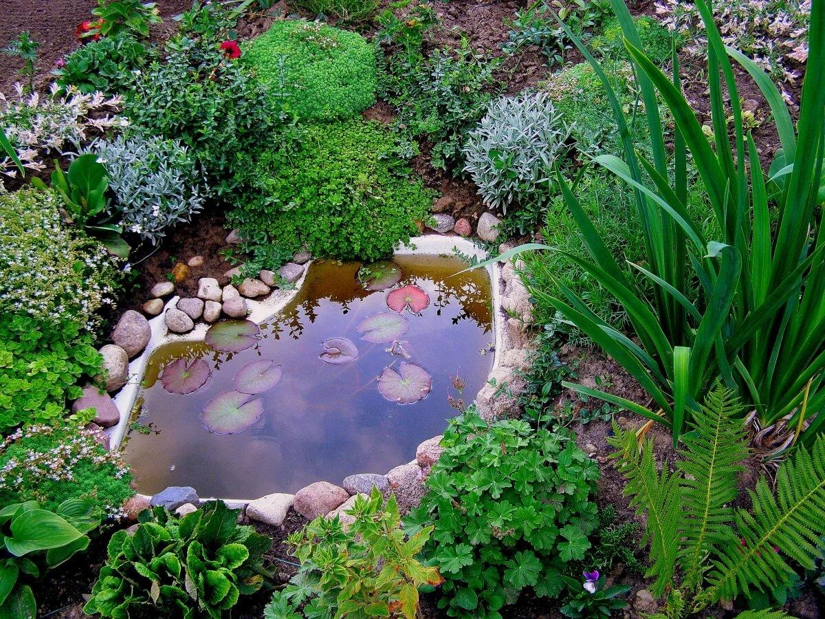 Картинки пруда в огороде