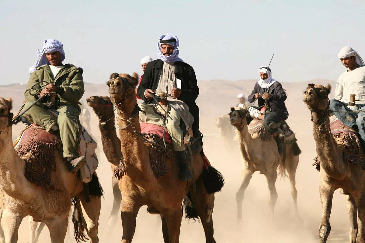 картинки кочевников пустыни этой статье расскажу