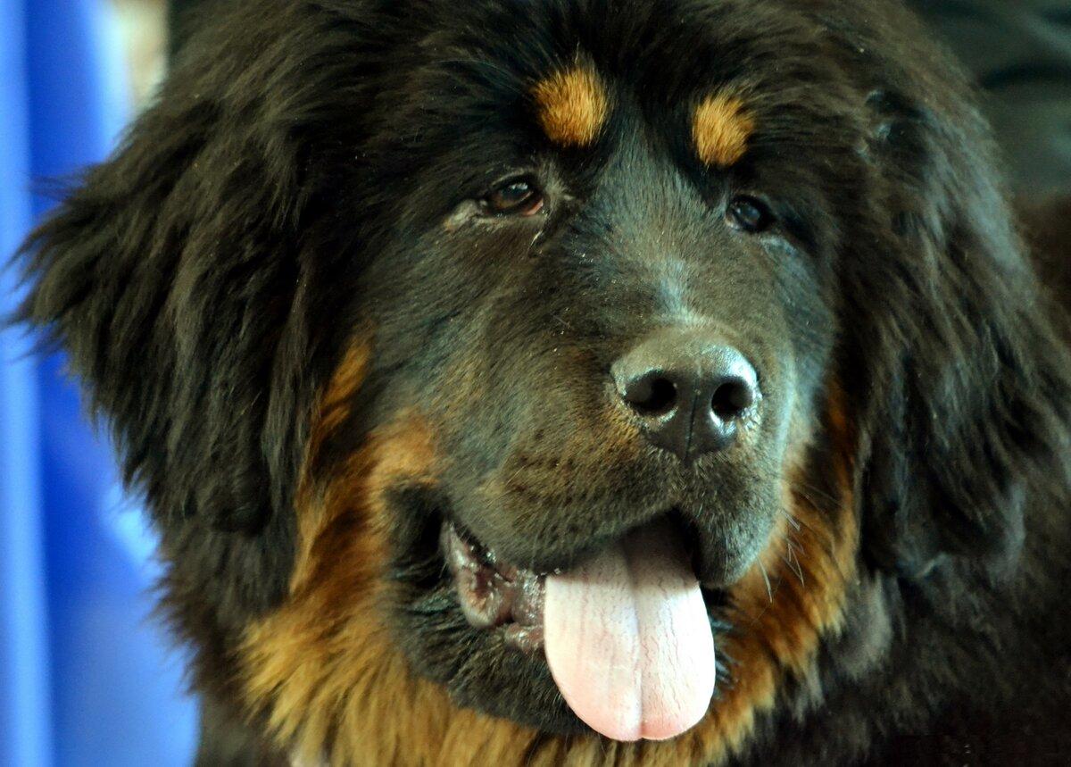 Картинки про больших собак