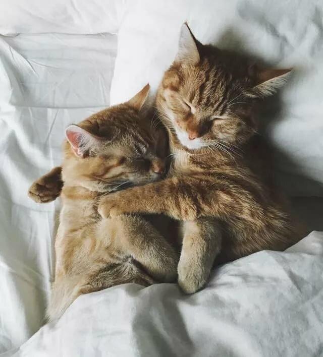 перенаправьте пусечки котята вдвоем обнимаются и засыпают картинки вьетнам плане