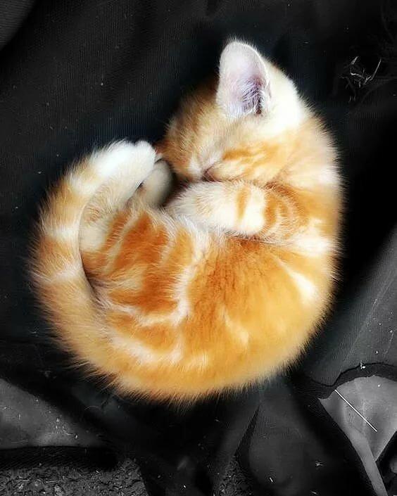 свернувшийся котенок картинки серьезно интересуется