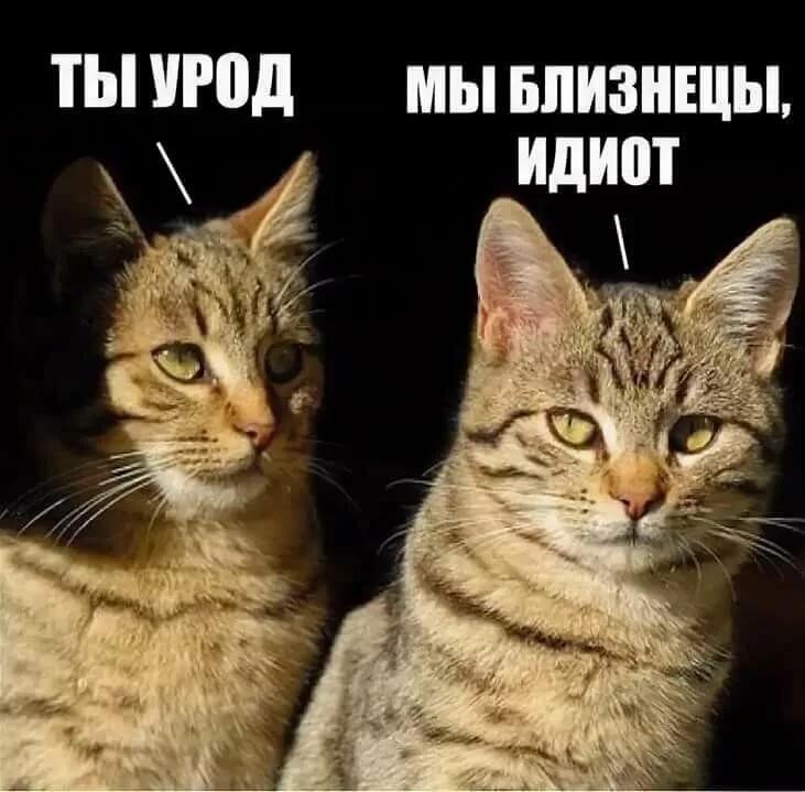 Мемы и картинки с надписями смешные