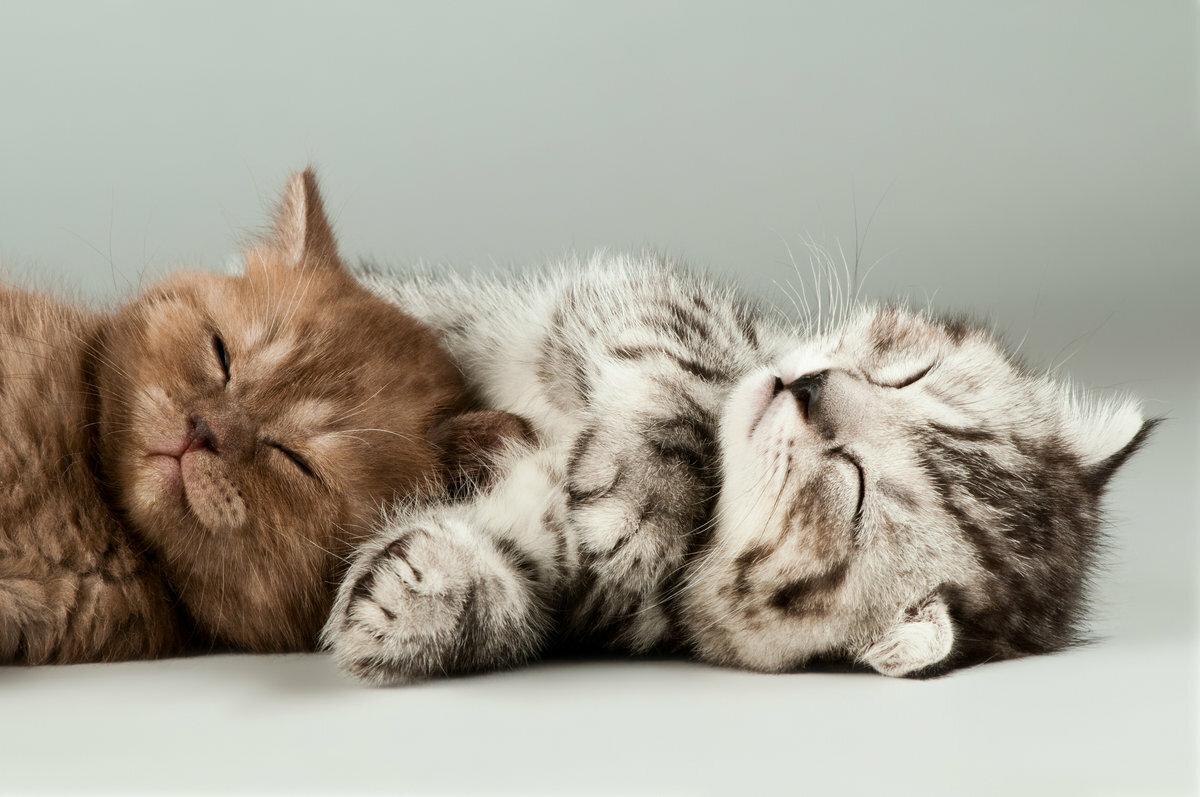 Своими руками, открытки спящий кот