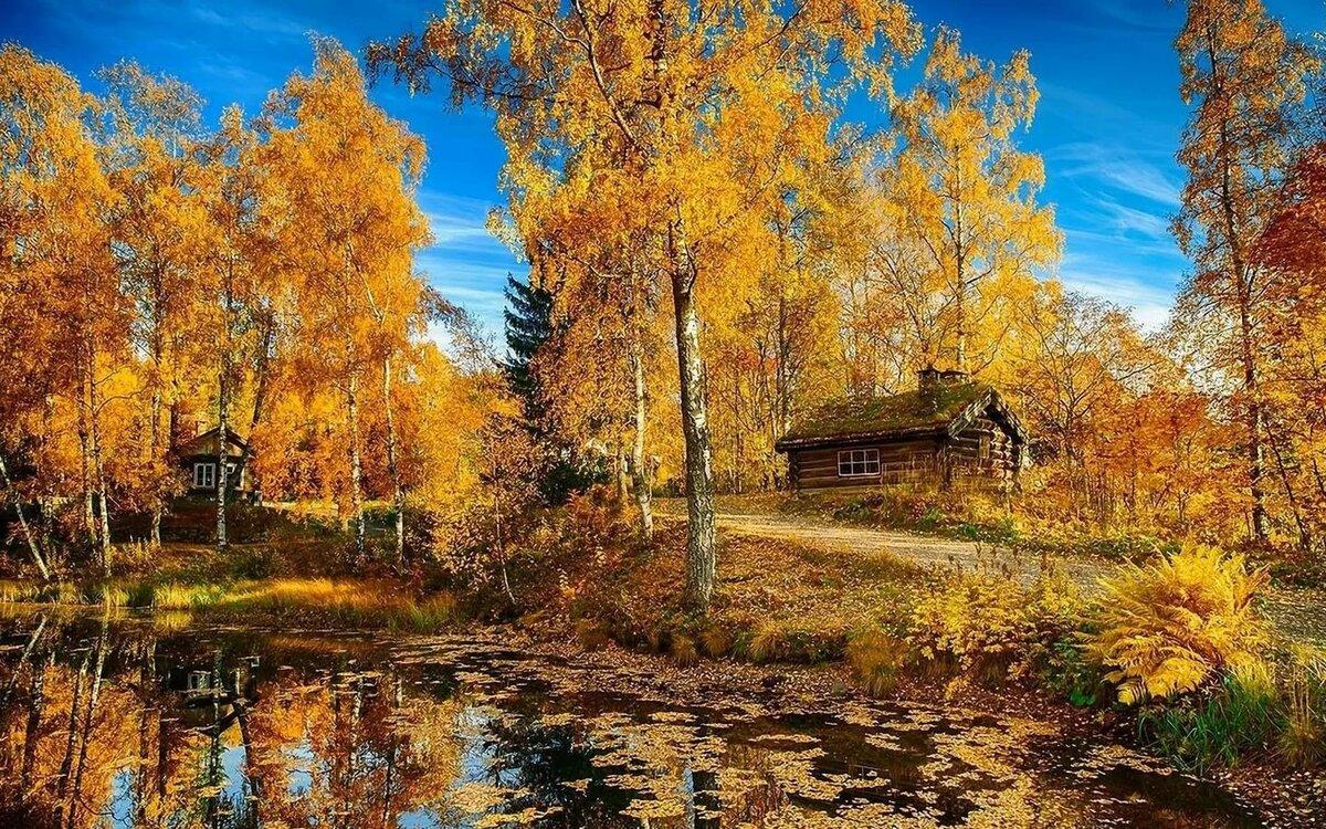 'желтому пейзажи в картинках про осень бизга