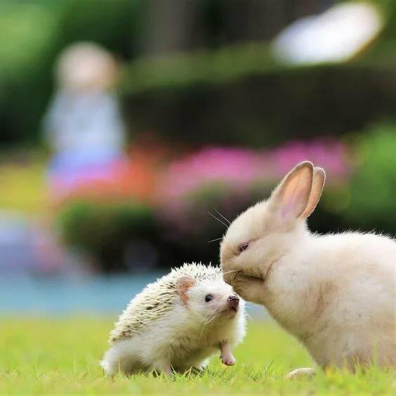Картинка кролик и ежик