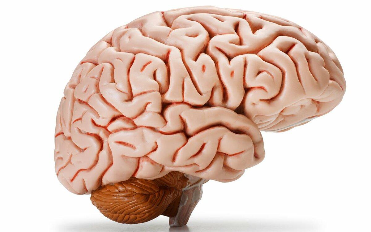 Сентября, картинки мозга для детей