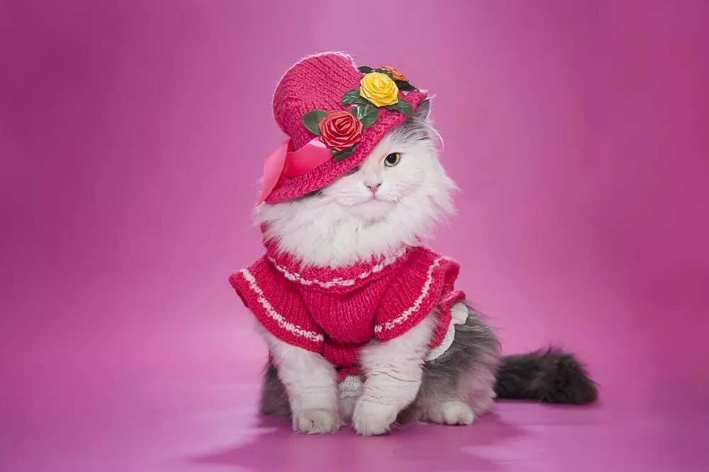 Картинки котята в платьях находится небольшое
