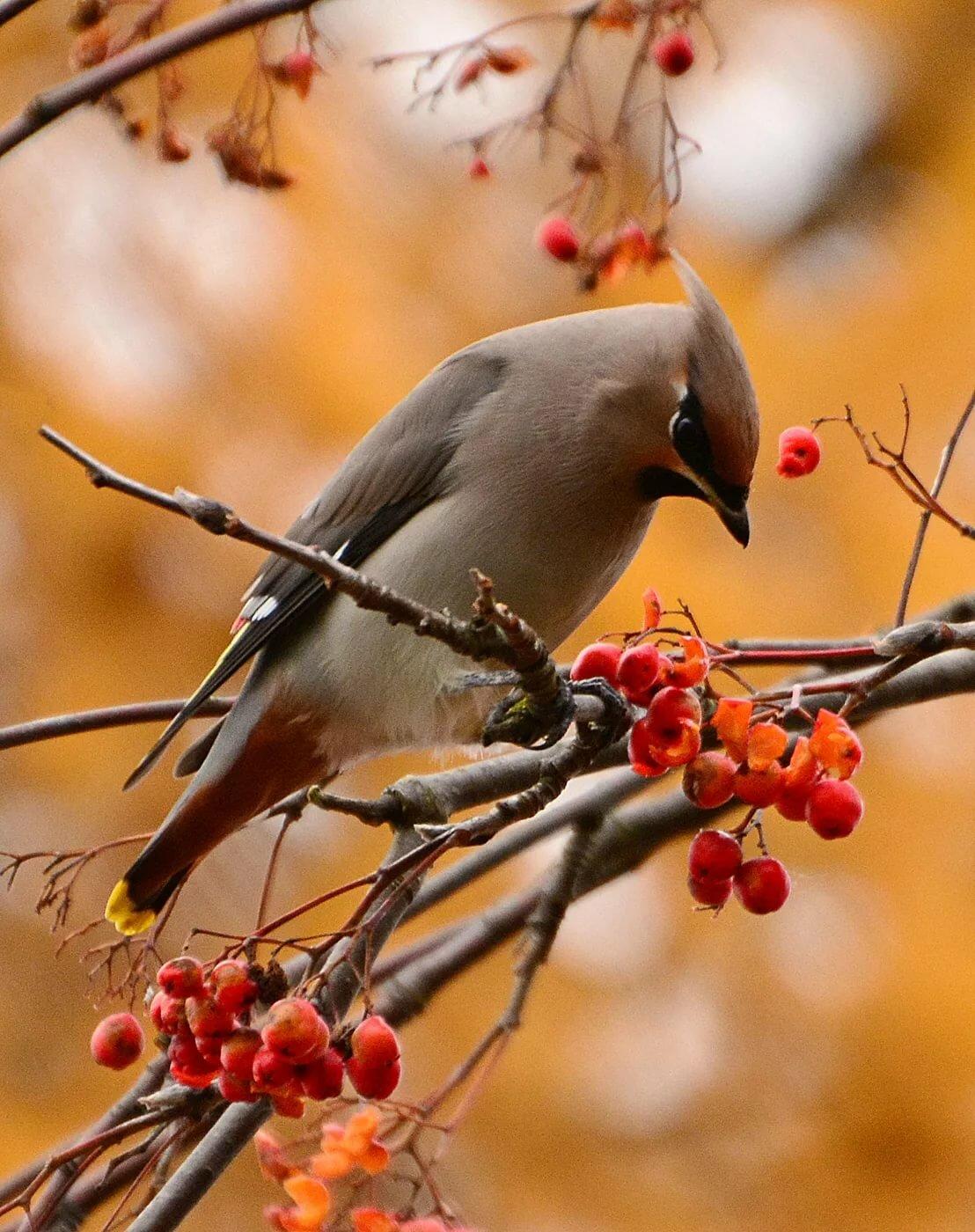 Картинки осень с птичками