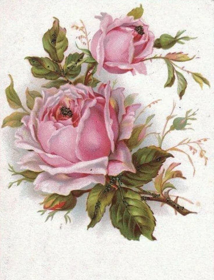 Мое, винтаж открытки розы