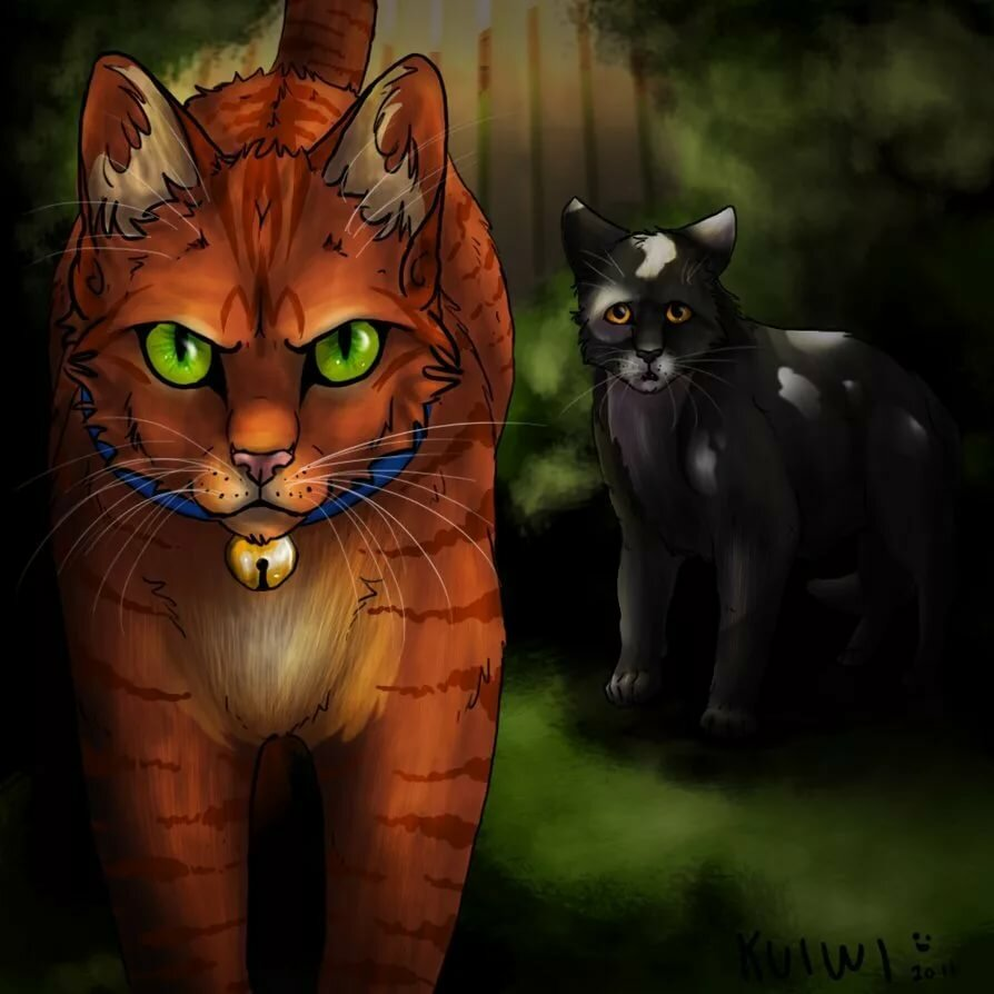 Классные картинки котов воителей грустные, девушке
