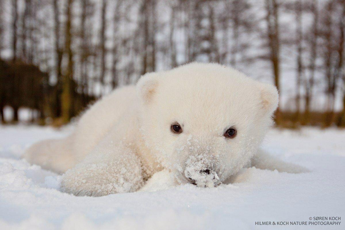 сборке надо фото мишек в снегу нас питомнике