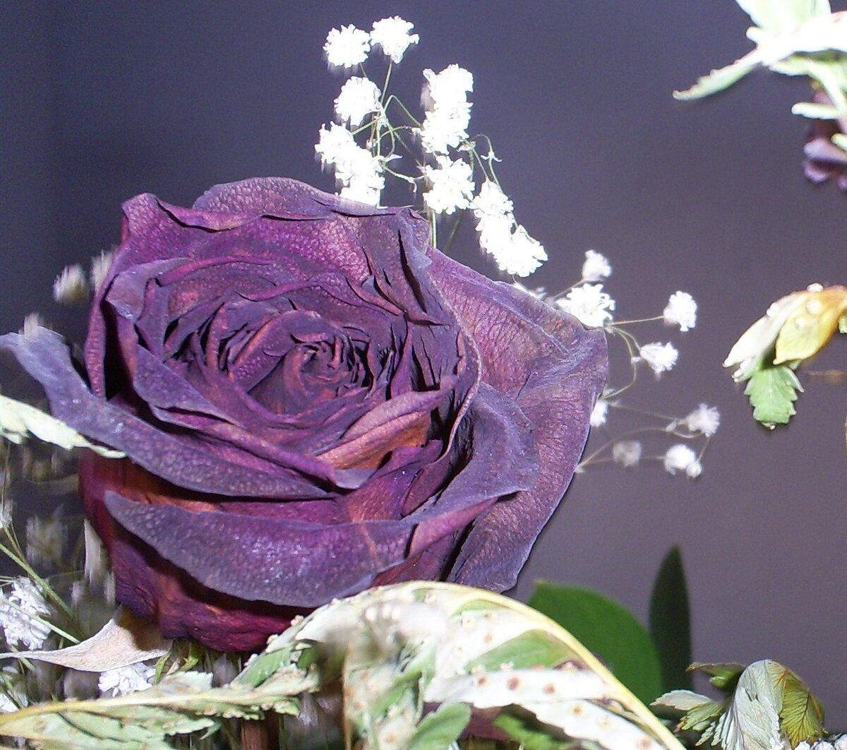 любом красивые редкие картинки розы принялся создавать