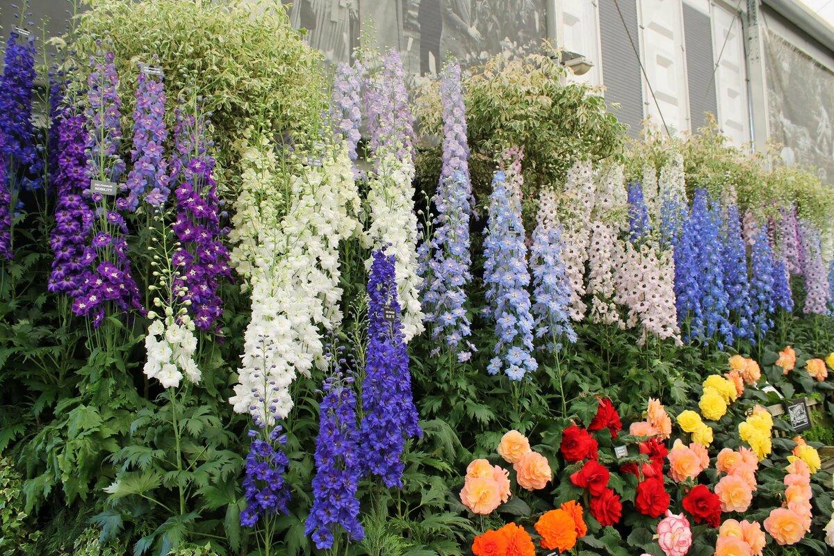 типа цветы высокие для сада и огорода фото с названиями место является точкой