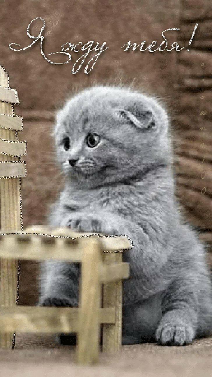 Картинка я тебя жду котик