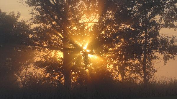 Разрезая утренний туман