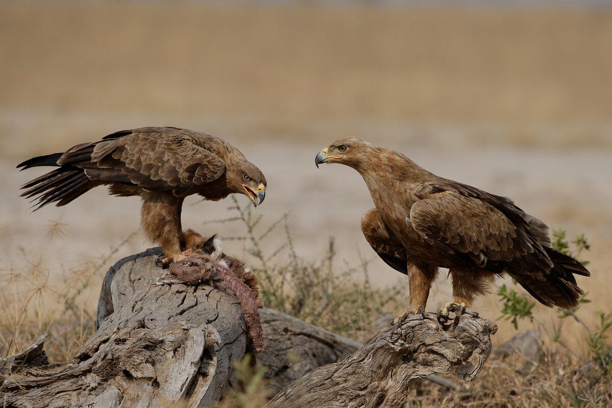 Птицы обитающие в днепропетровской области фото изделия