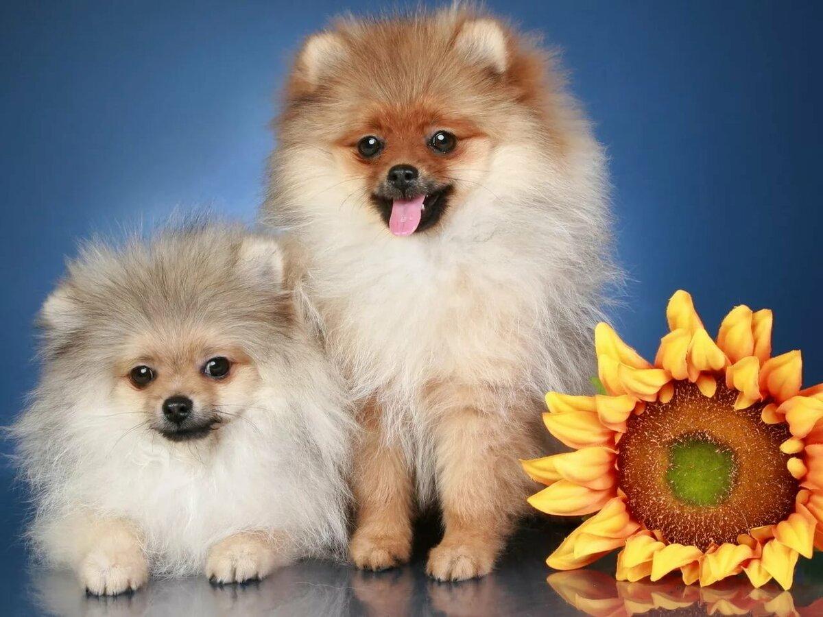 Ванечке, картинки на телефон собачки