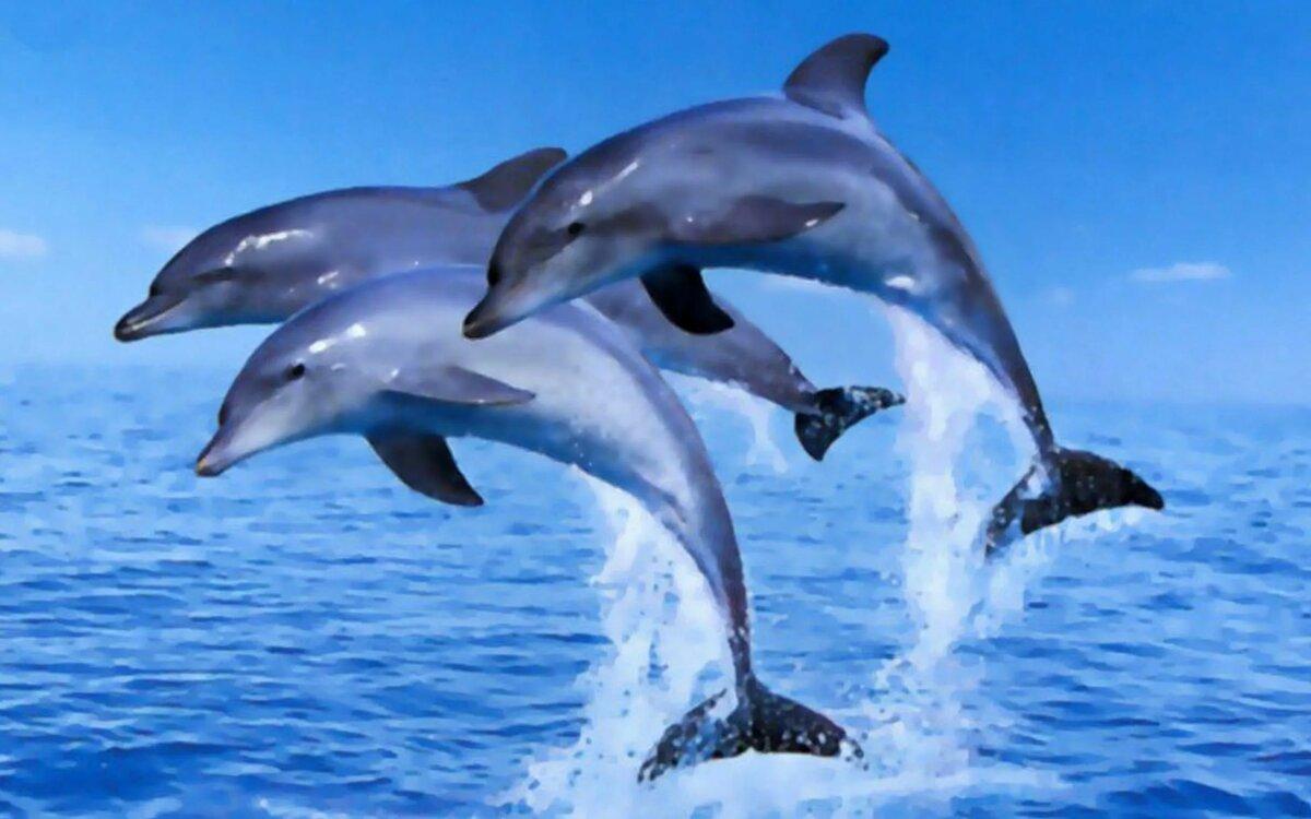 картинки на телефон дельфинчики окончательной версии