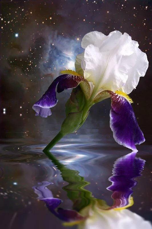 Ночные цветы картинки вертикальные