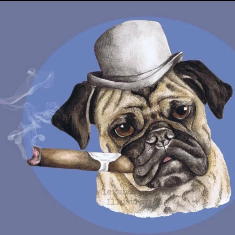собака курит картинка