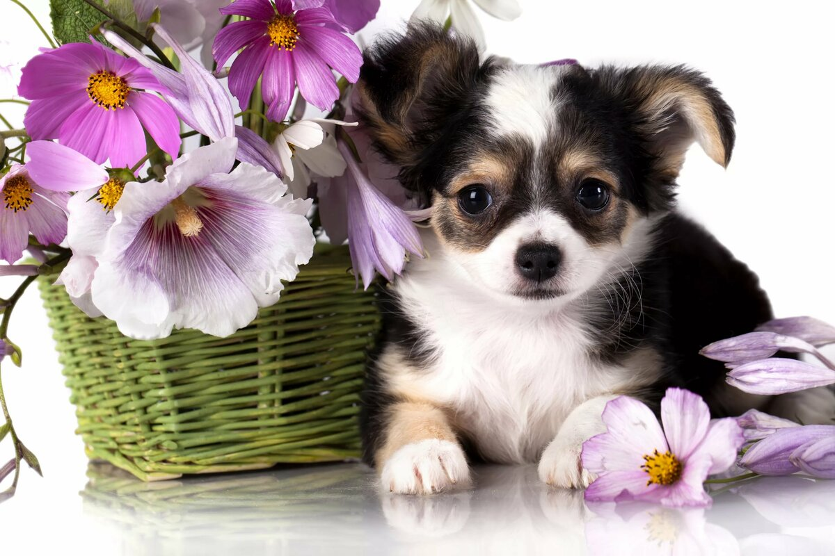 Открытки с днем рождения с маленькими собачками