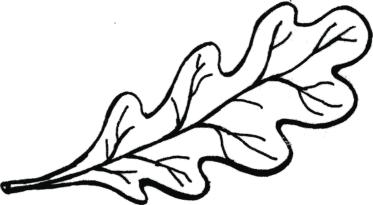 Листья репки картинки