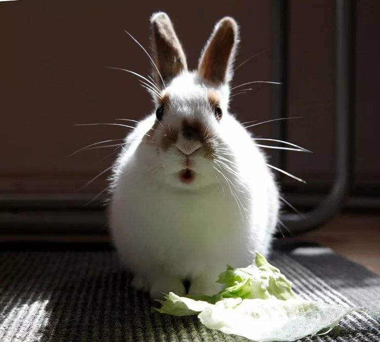 смешные кролики фото стикеры своих родителей