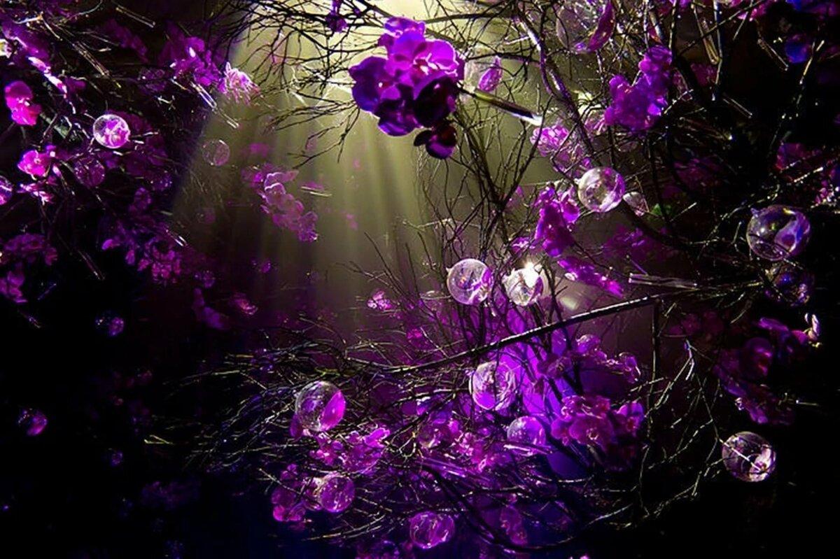 картинки фиолетового цвета фото архиве умолчанию