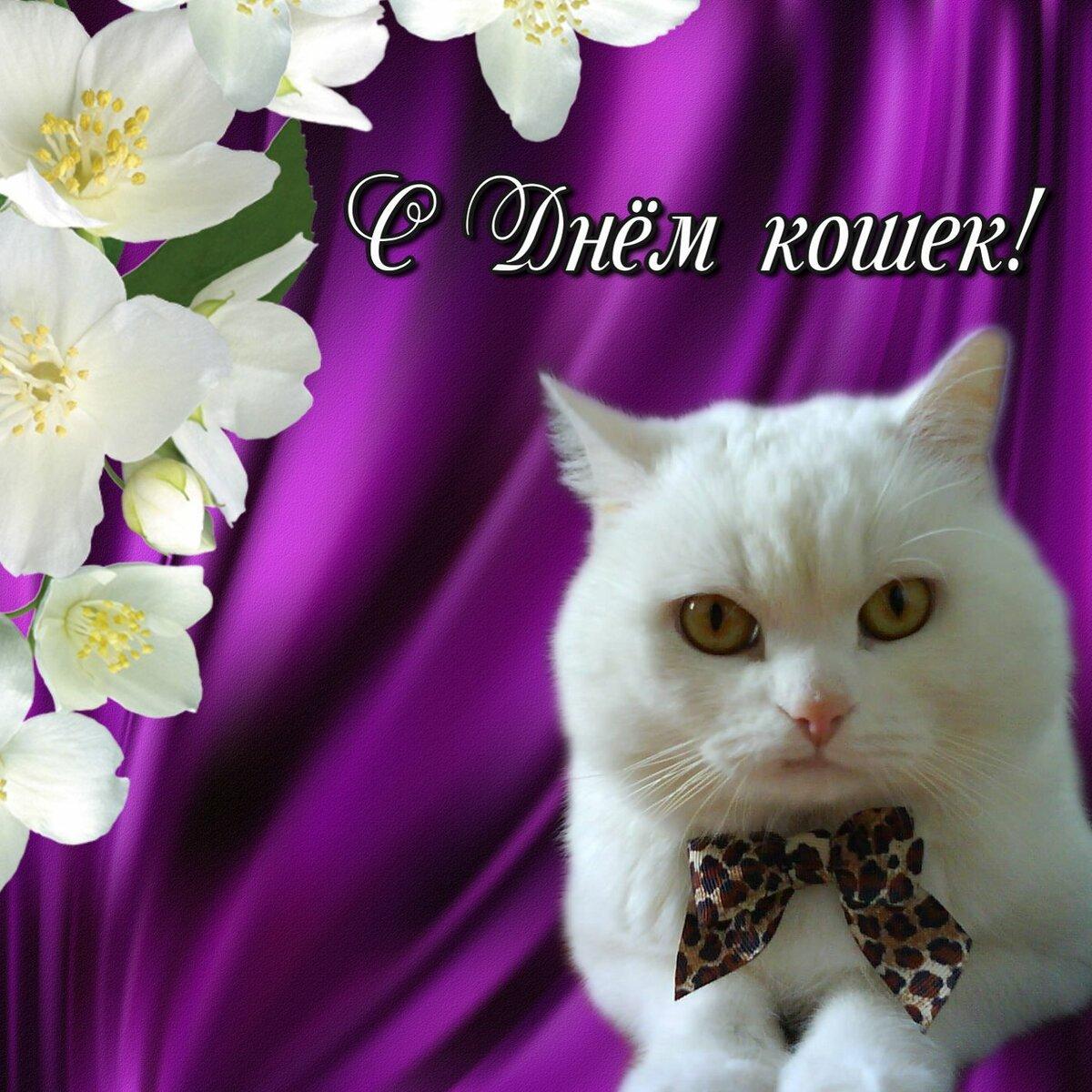 даже поздравления с всемирным днем кошек 8 августа если