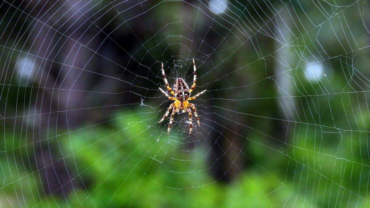 Примета паук картинка