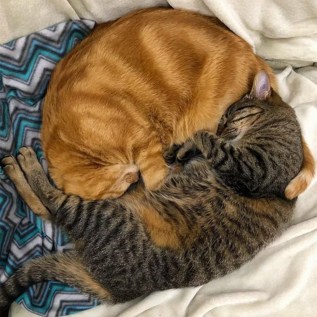 расскажите, пусечки котята вдвоем обнимаются и засыпают картинки отличие