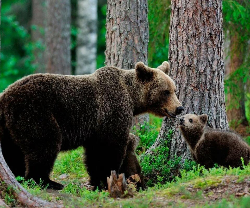 фотографии всех лесных животных очень обеспеченные