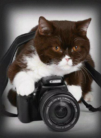 Разрешите на память ваше фото ??? Техноштучки Постила