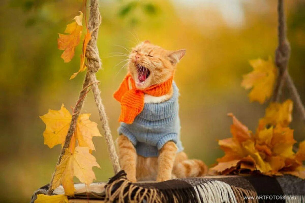 Смешные картинки золотая осень