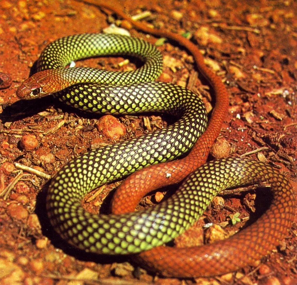 фото всех змей мира с названиями