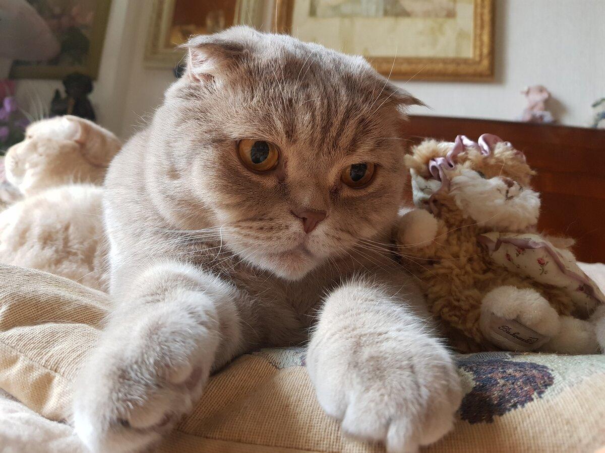 бриллианта случаются картинки реальные вислоухие коты многочисленным отзывам, она