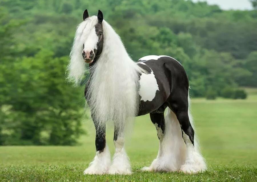 Смотреть картинки самых красивых лошадей в мире