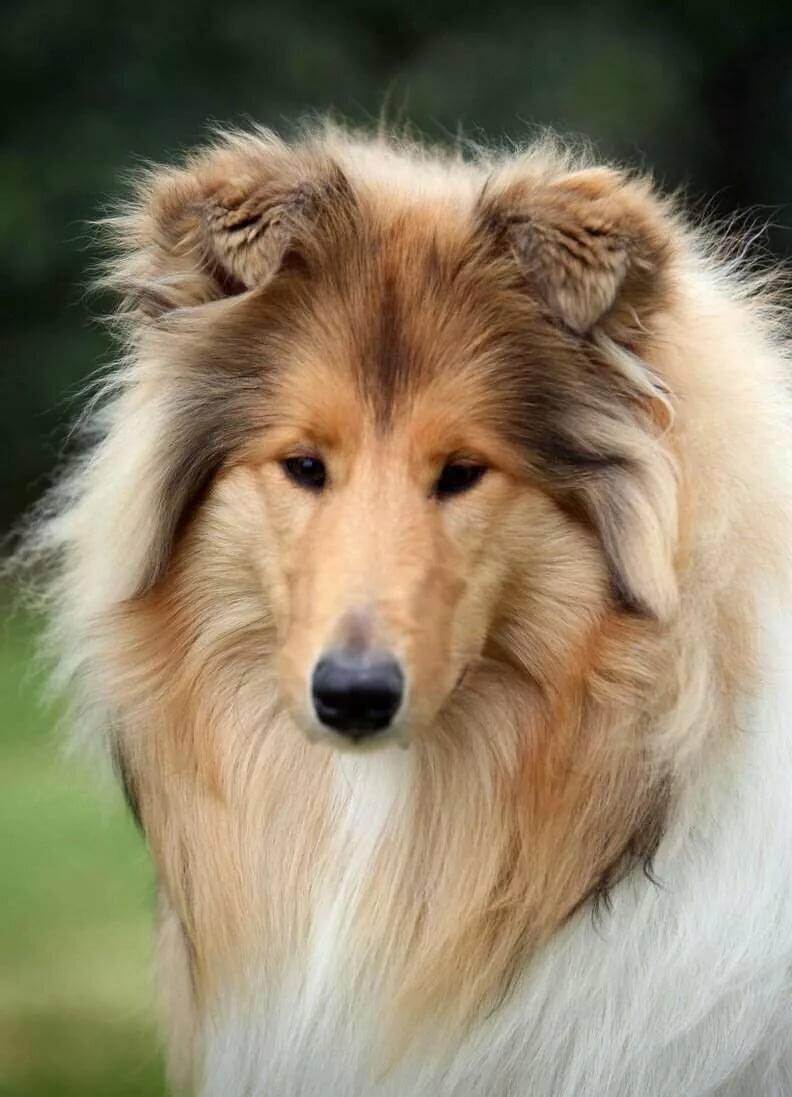 самые красивые картинки всех собак самых популярных изделий