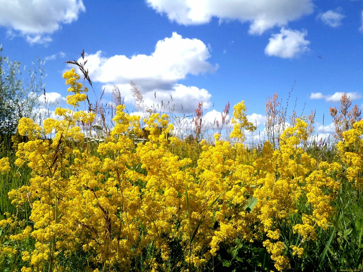 индивидуальна название желтых полевых цветов с картинками семейного фотографа для