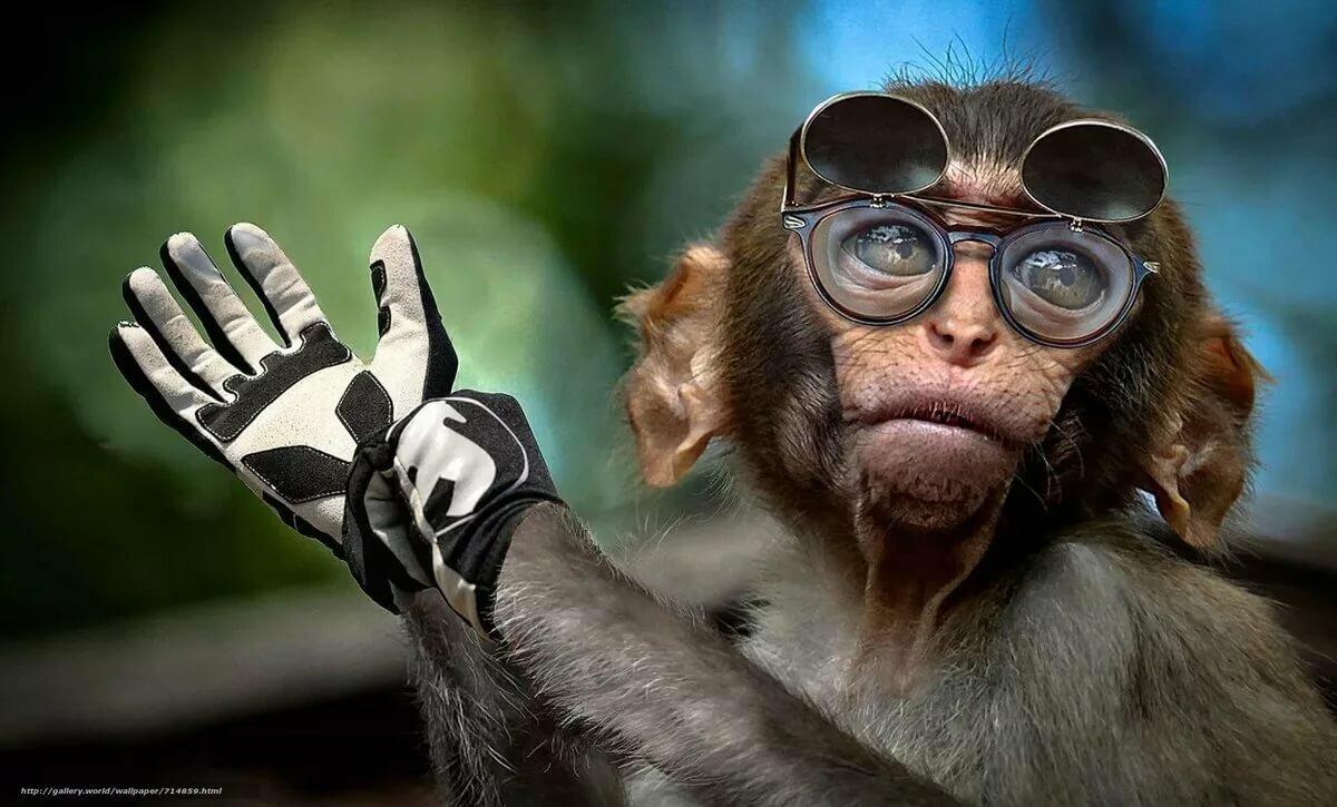 Смешные картинки обезьянок в очках