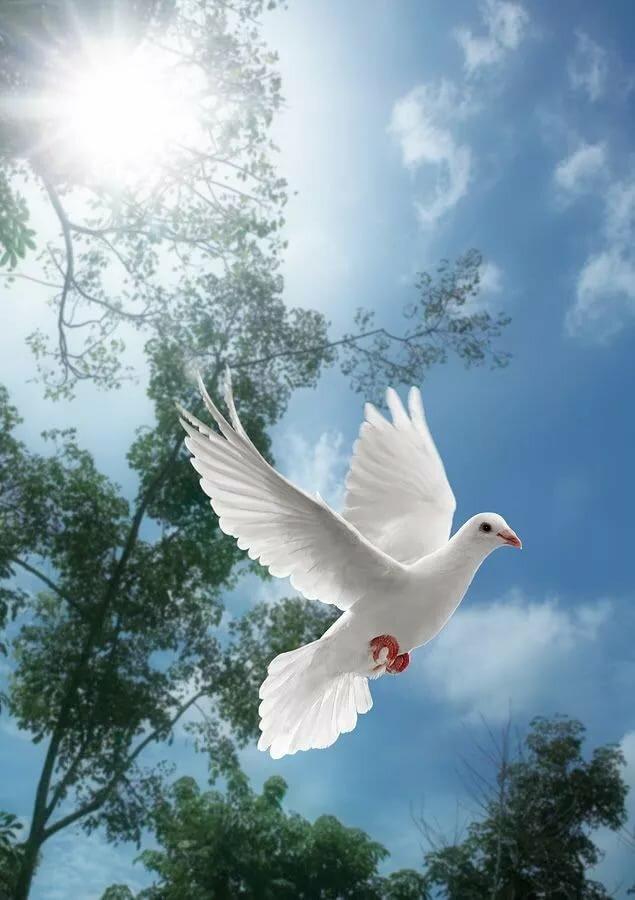 Голубь в небе красивая картинка