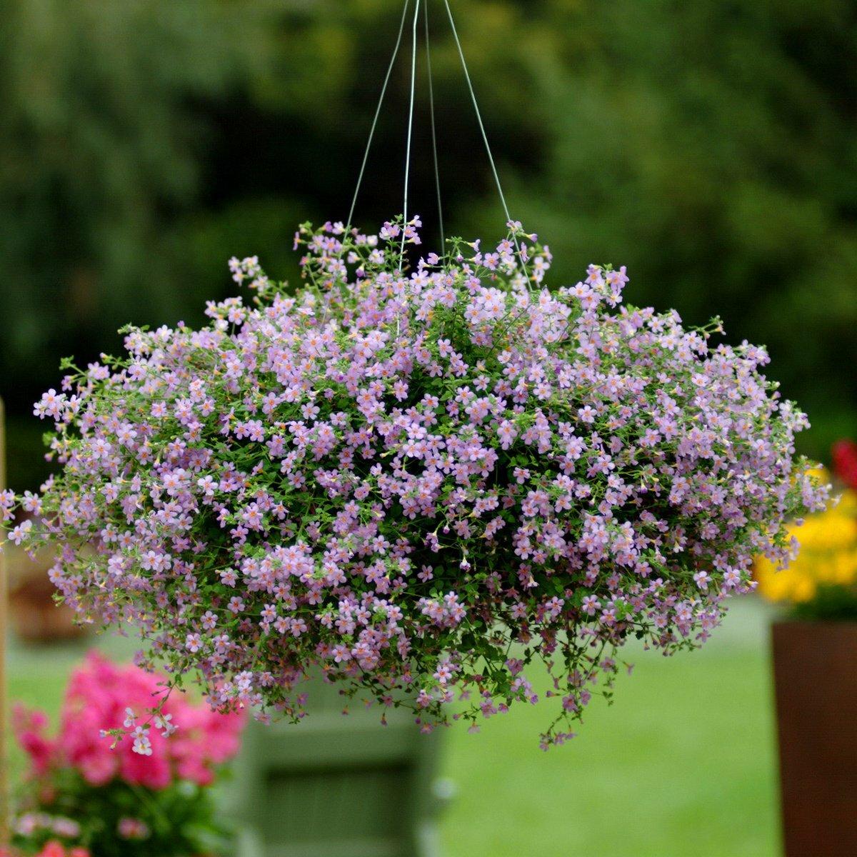 коллаж фото фото и названия цветов для подвесных кашпо что тебя