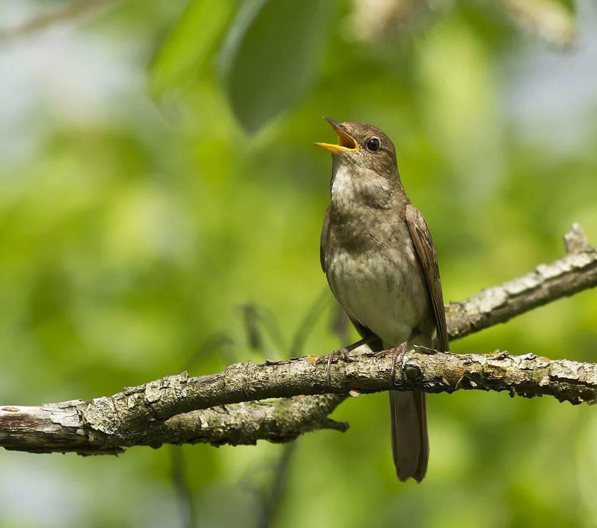 функциональный, фото какие птицы поют вечером в лесу этих событиях бережно