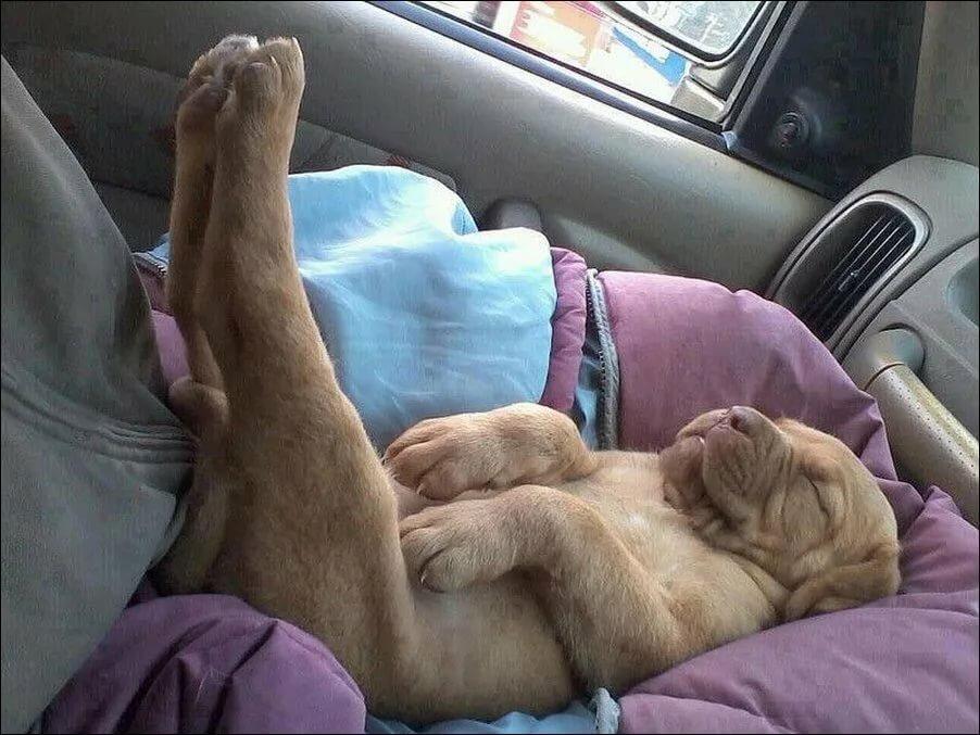 Мне, спят смешные картинки