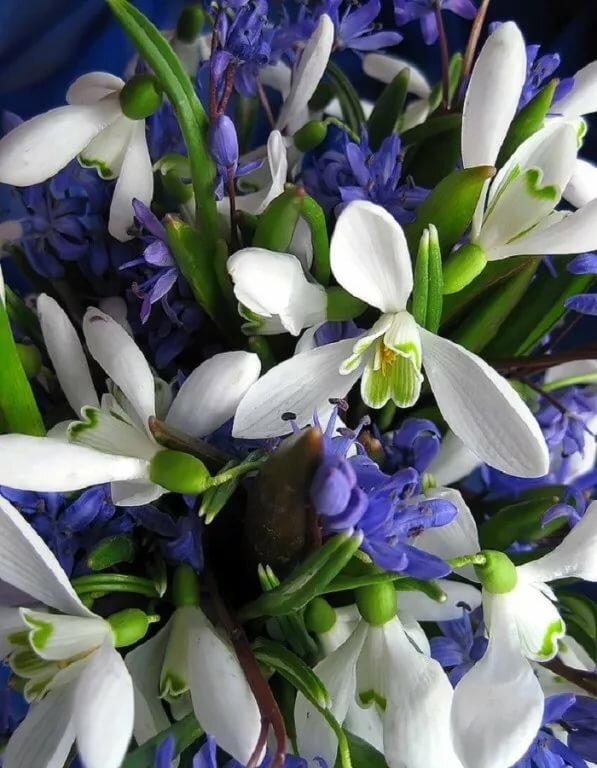 Картинка с днем рождения весенние цветы